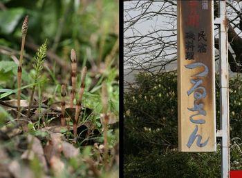 めぶき2.JPG